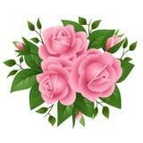 Ilustración del vector de rosas rosadas libre illustration