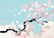 Ilustración del vector del flor de cereza Foto de archivo