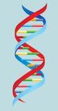 Ilustración del vector DNA Imagenes de archivo