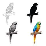 Ilustración del vector El sentarse en un loro de la rama con turquesa se va volando Línea blanco y negro, silueta, blanco y negro ilustración del vector