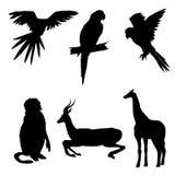 Ilustración del vector Sistema de animales, loro, jirafa, mono, gacela Silueta negra Imagen de archivo