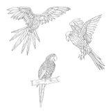 Ilustración del vector Sistema de los loros, loros que vuelan Loro que se sienta en una ramificación Línea blanco y negro Imágenes de archivo libres de regalías