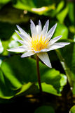 Ilustración del zen de la flor de loto Imagen de archivo