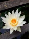 Ilustración del zen de la flor de loto Foto de archivo
