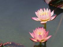 Ilustración del zen de la flor de loto Fotos de archivo