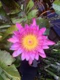 Ilustración del zen de la flor de loto Fotos de archivo libres de regalías