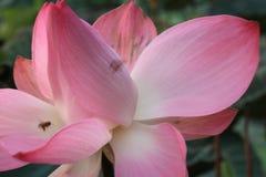 Ilustración del zen de la flor de loto imagenes de archivo