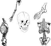 Ilustración esquelética humana Fotos de archivo