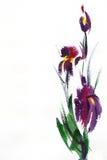 Ilustración floral de la acuarela. Fotos de archivo