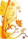 Ilustración floral del vector Fotografía de archivo