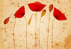 Ilustración hermosa del fondo de las amapolas Foto de archivo libre de regalías