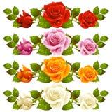Ilustración horizontal de la rosa del vector aislada en fondo Foto de archivo
