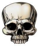 Ilustración humana del cráneo Fotografía de archivo libre de regalías
