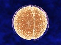 Ilustración médica de la división de la célula Imagen de archivo libre de regalías
