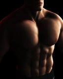 Ilustración masculina de Digitaces del torso del BodyBuilder stock de ilustración