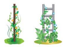Ilustración - plantas verticales con las flores Imágenes de archivo libres de regalías