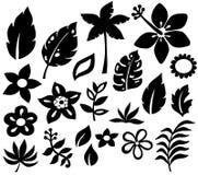 Ilustración tropical del vector de las flores Fotos de archivo