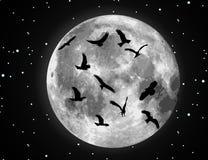 Ilustración y pájaros de la luna del vector Fotos de archivo