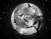 Ilustración y pájaros de la luna del vector Fotos de archivo libres de regalías