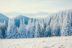 ilustraci śniegu stylizowana drzewna zima Zdjęcia Royalty Free