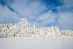 ilustraci śniegu stylizowana drzewna zima Fotografia Stock