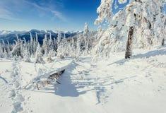 ilustraci śniegu stylizowana drzewna zima Zdjęcia Stock