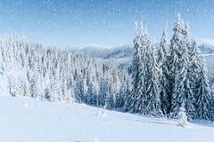 ilustraci śniegu stylizowana drzewna zima Karpacki, Ukraina, Europa Bokeh lekki ef Zdjęcie Royalty Free