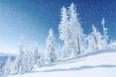 ilustraci śniegu stylizowana drzewna zima Karpacki, Ukraina, Europa Bokeh lekki ef Obraz Stock