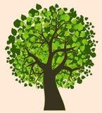 ilustraci odosobniony lato drzewo Zdjęcie Royalty Free
