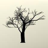 Ilustración con la silueta del árbol de la ramificación. EPS 8 Imagen de archivo libre de regalías