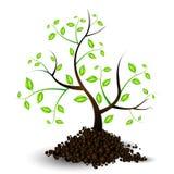 Ilustración del crecimiento de un árbol joven Fotos de archivo libres de regalías