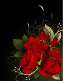 Ilustración del vector de las rosas Foto de archivo