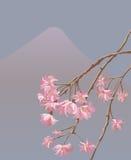 Ilustración del vector de sakura japonés Fotografía de archivo libre de regalías