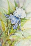 Ilustraciones con el iris ilustración del vector