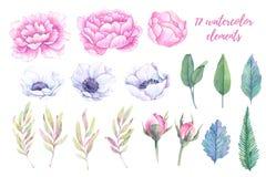 Ilustraciones de la acuarela Hojas de la primavera, peonías y anémonas la Florida libre illustration