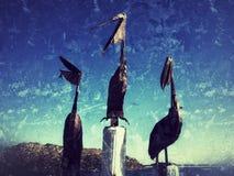 Ilustraciones de pelícanos Foto de archivo libre de regalías