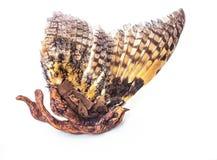 Ilustraciones de Shamanic del pájaro de vuelo hechas de materiales naturales fotos de archivo libres de regalías