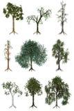 Ilustraciones del árbol libre illustration