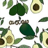 Ilustracja avocado i liść, tapeta, tło, jarzynowy druk fotografia royalty free