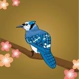 Błękitna sójka royalty ilustracja