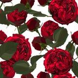 Ilustracja czerwone róże i liście Bezszwowy wzór okwitnięcie kwitnie na białym tle ilustracja wektor