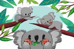 Ilustracja Dla dzieci: Koala niedźwiedzia karta ilustracji