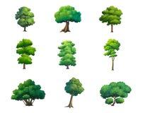 Ilustracja drzewa odizolowywający na białym tle Fotografia Stock