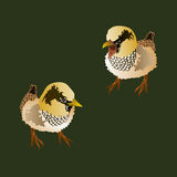 Ilustracja dwa ptaka Zdjęcie Stock