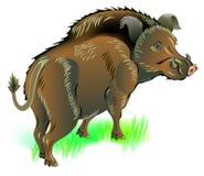 Ilustracja dziki knur Obraz Stock
