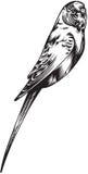 Kanarowy ptak Zdjęcia Royalty Free