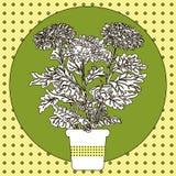 Ilustracja kwiat w garnku Fotografia Royalty Free