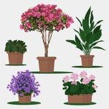 Ilustracja kwiaty w garnku Zdjęcia Royalty Free