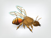 Ilustracja mrówka odizolowywająca na bielu Obraz Stock