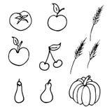 ilustracja owocowy wektor Obrazy Royalty Free